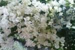 TurismoInCilento.it - B&B,Casevacanze,Hotel - Giardino Dionysos - 5784 giardino dionysos giugnano 8