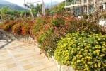 TurismoInCilento.it - B&B,Casevacanze,Hotel - Hotel Promenade Bleu - 5819 hotel pollica pioppi promenade bleu 13